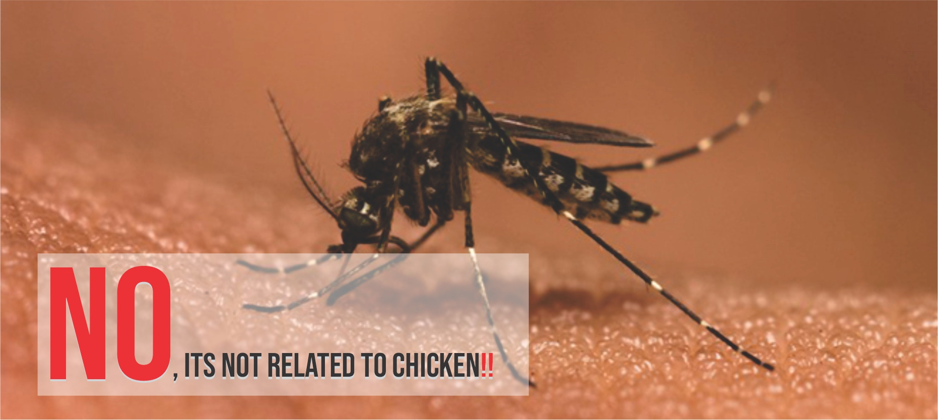 Know All About Chikungunya